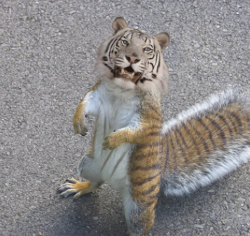 Name:  Tiger Squirrel.PNG